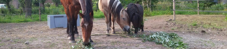 Paard & Wagen